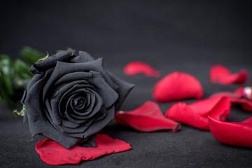 ¿Por qué fracasamos en el amor?